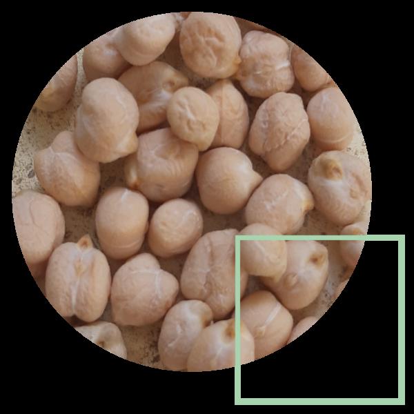 Legumi / Cereali